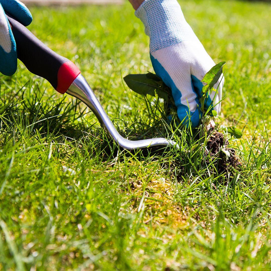 Celoroční údržba a servis trávníku