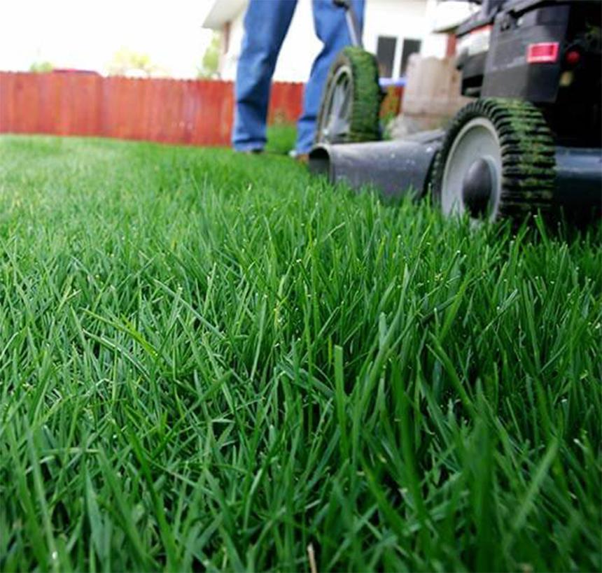 Ošetřování trávníku dnes a každý další den.